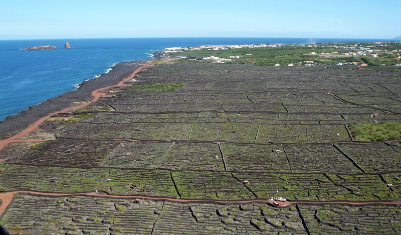 Pico Vineyard in the Azores