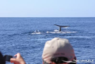 Azores-whales