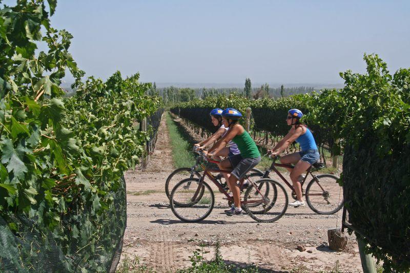 Wine-touring_on_bikes