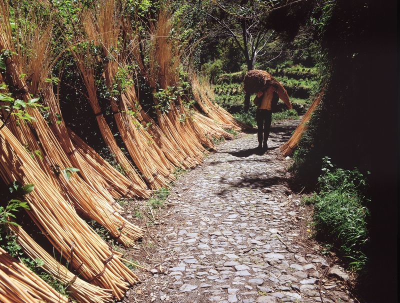 Wicker- Photo credit to Associacao de Promocao da Madeira