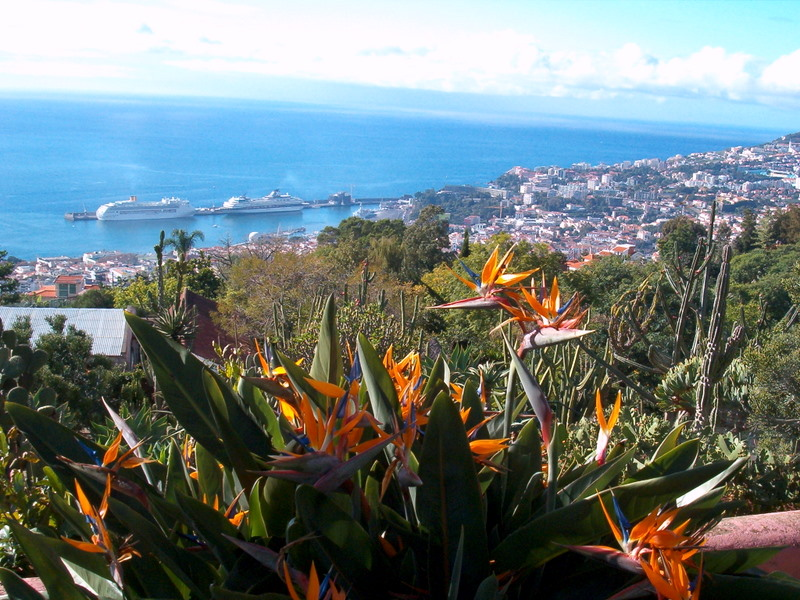 Panoramic_View_of_Funchal_from_Madeira_Botanical_Garden