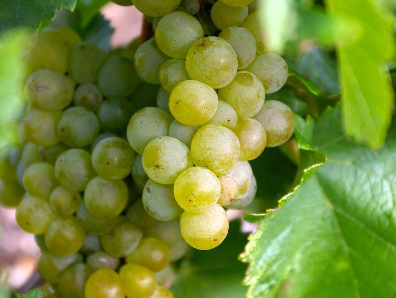 Grapes-457289_960_720