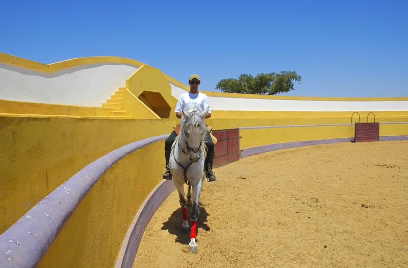 Cavalos - Photo Credit to Turismo do Alentejo