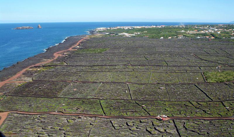 Pico Vineyard LAJIDO_C.VELHA - Photo Credit to Direccao Regional do Ambiente
